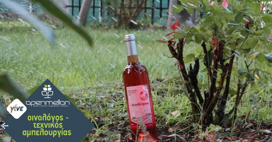 summer_winemaking1